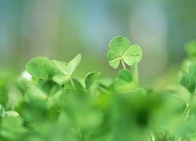 nature, leaves, clover - random desktop wallpaper