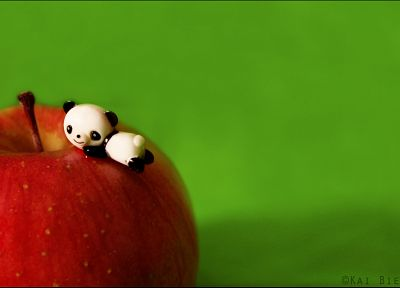 panda bears, apples, simple background, green background - random desktop wallpaper