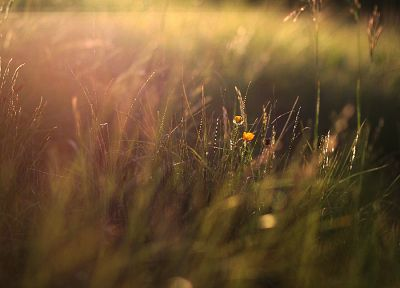 nature, flowers, grass, plants, sunlight, macro - desktop wallpaper