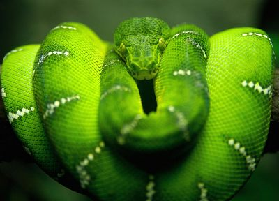 green, snakes, branches - random desktop wallpaper