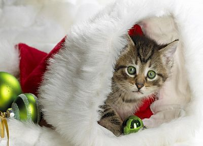 cats, Christmas, kittens - random desktop wallpaper