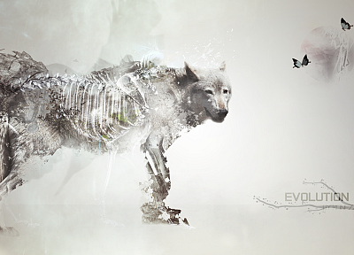 light, evolution, artwork, SpeedART, wolves - desktop wallpaper