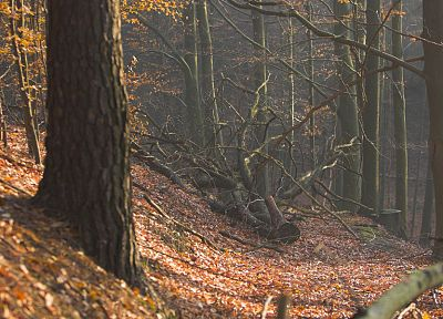 nature, trees, autumn, forests, woods - related desktop wallpaper