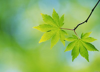 green, nature, leaves, depth of field - related desktop wallpaper