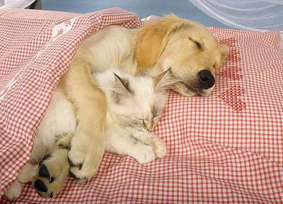 animals, dogs, sleeping - random desktop wallpaper