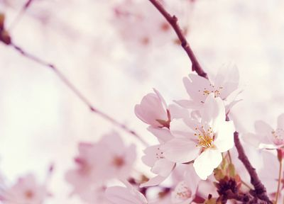 nature, trees, flowers - related desktop wallpaper
