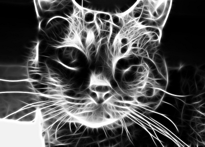 cats, Fractalius, grayscale - random desktop wallpaper