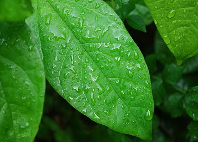 green, nature, leaves, wet, plants, water drops, macro - related desktop wallpaper
