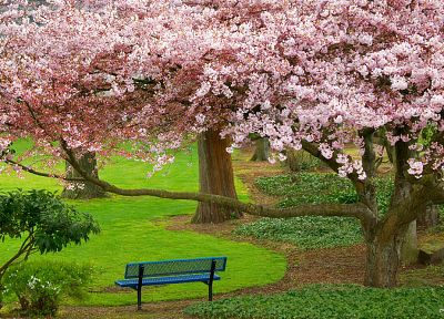 trees, blossoms, bench, parks - related desktop wallpaper