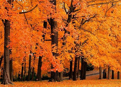 nature, trees, autumn, forests - random desktop wallpaper