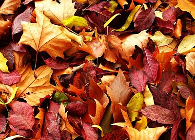 nature, autumn, leaves - random desktop wallpaper