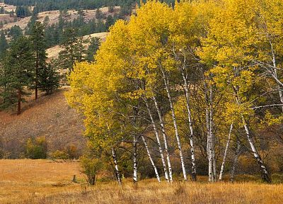 mountains, Grove, Aspen, Washington - related desktop wallpaper