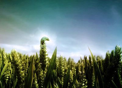 chameleons, fields, skyscapes - random desktop wallpaper