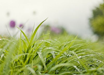 nature, grass, water drops, depth of field, blurred background - related desktop wallpaper