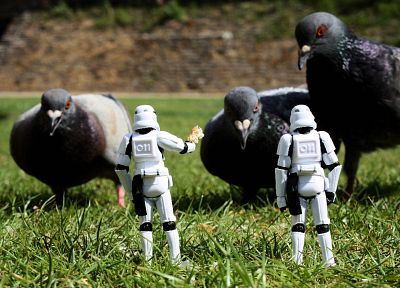 Star Wars, stormtroopers, grass, pigeons, figurines, action figures - related desktop wallpaper