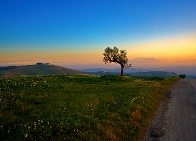 sunset, landscapes, nature, trees, fields, roads, blue skies - desktop wallpaper