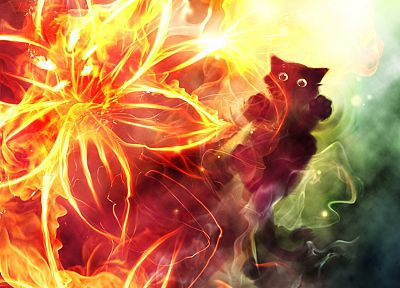cats, fire, Apofiss, flame - random desktop wallpaper