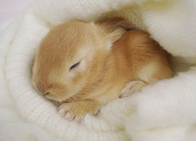 bunnies, animals, rabbits, baby animals - random desktop wallpaper
