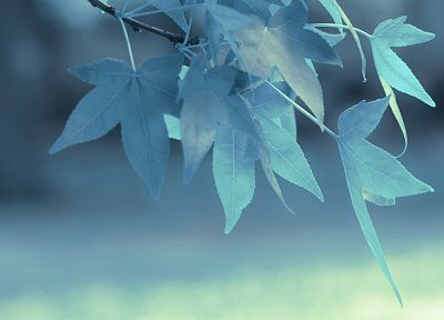 blue, leaves, depth of field - random desktop wallpaper