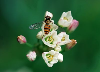 flowers, insects, wasp - desktop wallpaper