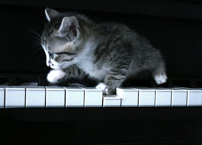 piano, cats, grayscale, kittens - related desktop wallpaper