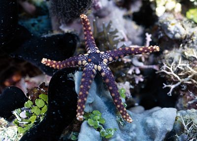 nature, starfish, sea - related desktop wallpaper