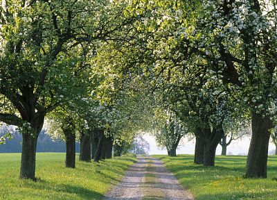 trees, fields, spring, roads - random desktop wallpaper
