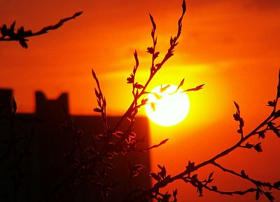 sunset, Sun, branches - desktop wallpaper