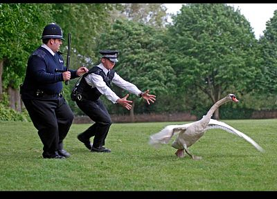 trees, animals, grass, police, swans, screenshots, Hot Fuzz, Simon Pegg, Nick Frost - related desktop wallpaper