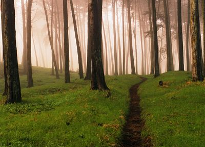 nature, trees, forests, fog, mist, woods - related desktop wallpaper