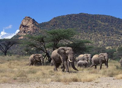 mountains, trees, animals, elephants, baby elephant, baby animals - desktop wallpaper