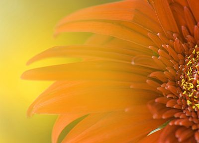 nature, flowers, macro - related desktop wallpaper