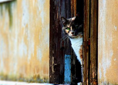 cats, animals, doors - related desktop wallpaper