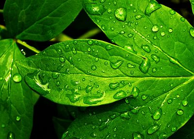 green, nature, rain, leaves, plants, water drops, dew - related desktop wallpaper