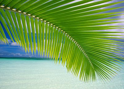 green, ocean, leaves, palm leaves - desktop wallpaper