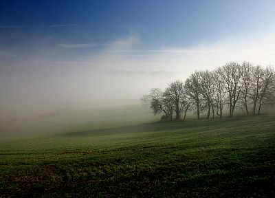 landscapes, trees, fields, mist - related desktop wallpaper