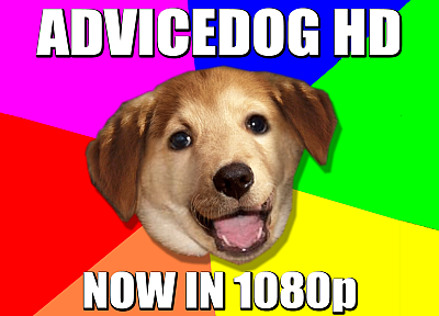 dogs, meme - related desktop wallpaper