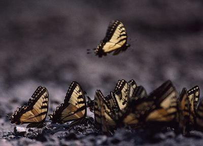 insects, butterflies - random desktop wallpaper