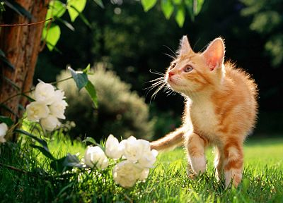 flowers, cats, orange, grass, outdoors - desktop wallpaper