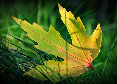 green, abstract, nature, leaves - desktop wallpaper