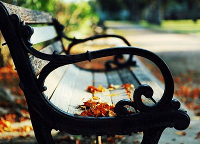 close-up, nature, autumn, leaves, paths, bench, scenic, fallen leaves - related desktop wallpaper