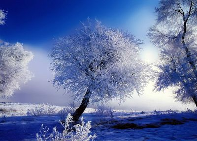 landscapes, winter, trees, HDR photography - random desktop wallpaper