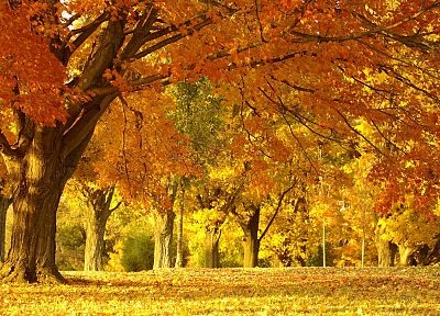 landscapes, nature, trees, autumn, forests, leaves, fallen leaves - desktop wallpaper