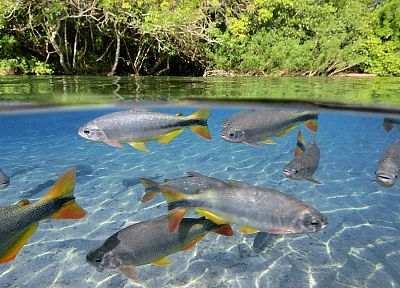 fish, Brazil, split-view - random desktop wallpaper