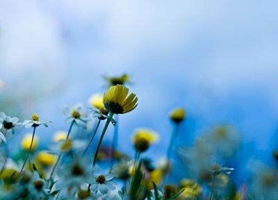nature, flowers, yellow flowers, blurred background - related desktop wallpaper