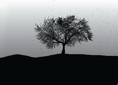 black, trees, white, grayscale - random desktop wallpaper