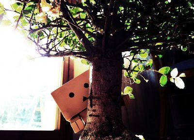 Danboard, bonsai - related desktop wallpaper
