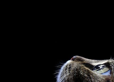 cats, animals, black background - related desktop wallpaper