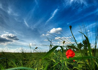 clouds, landscapes, flowers, fields, meadows, skyscapes - related desktop wallpaper