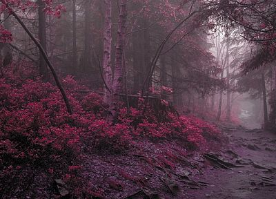 landscapes, nature, forests, purple - related desktop wallpaper